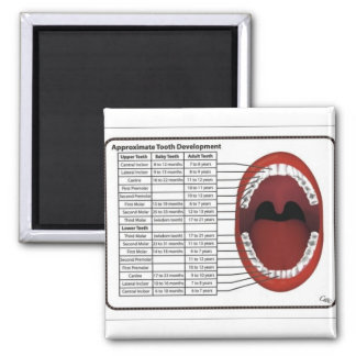 Adult/Child Tooth Eruption Timetable Square Magnet