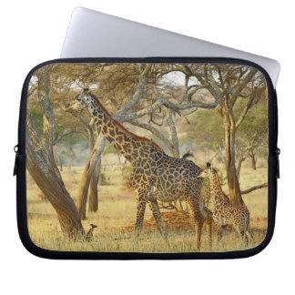 Adult female and juvenile Giraffe, Giraffa Laptop Sleeve