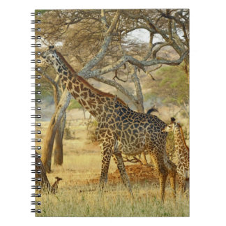 Adult female and juvenile Giraffe, Giraffa Notebook