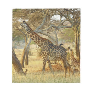 Adult female and juvenile Giraffe, Giraffa Notepad