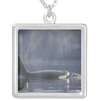 Adult female Orca Whale Orcinus Orca), Puget Silver Plated Necklace