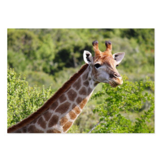 Adult Giraffe Face and Neck Business Card Template