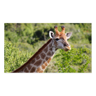 Adult Giraffe Face and Neck Business Card