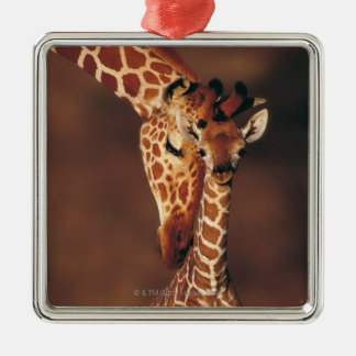 Adult Giraffe with calf (Giraffa camelopardalis) Christmas Ornament