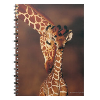 Adult Giraffe with calf (Giraffa camelopardalis) Notebooks