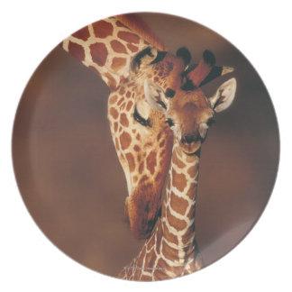 Adult Giraffe with calf (Giraffa camelopardalis) Plate