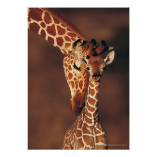 Adult Giraffe with calf (Giraffa camelopardalis) Poster