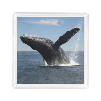 Adult Humpback Whale Breaching Acrylic Tray