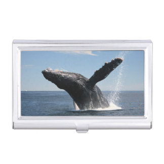 Adult Humpback Whale Breaching Business Card Holder