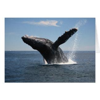 Adult Humpback Whale Breaching Card