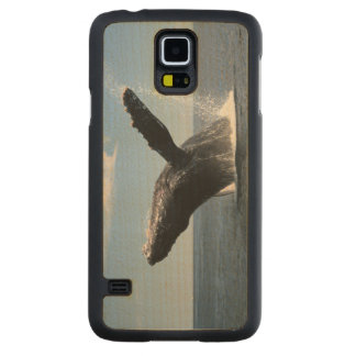 Adult Humpback Whale Breaching Carved Maple Galaxy S5 Case