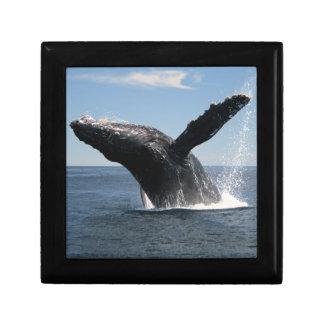 Adult Humpback Whale Breaching Gift Box