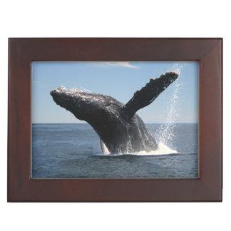 Adult Humpback Whale Breaching Keepsake Box