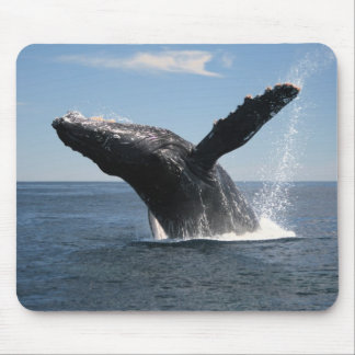 Adult Humpback Whale Breaching Mouse Pads