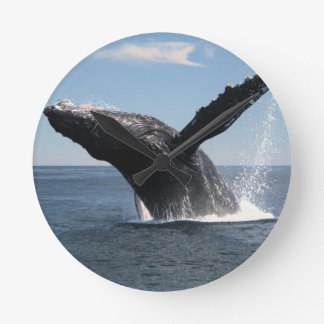 Adult Humpback Whale Breaching Round Clock