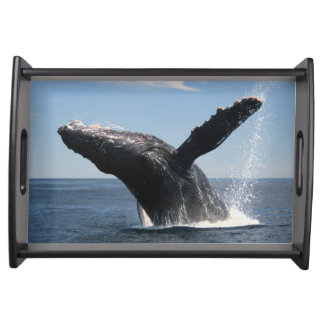 Adult Humpback Whale Breaching Serving Tray