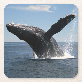 Adult Humpback Whale Breaching Square Paper Coaster