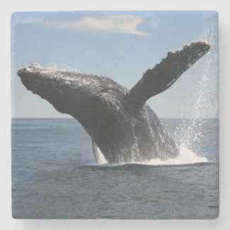 Adult Humpback Whale Breaching Stone Coaster
