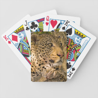 Adult Leopard (Panthera Pardus) Rests Bicycle Playing Cards