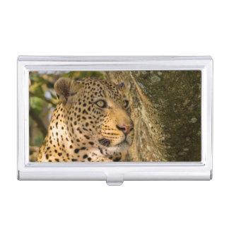 Adult Leopard (Panthera Pardus) Rests Business Card Holder