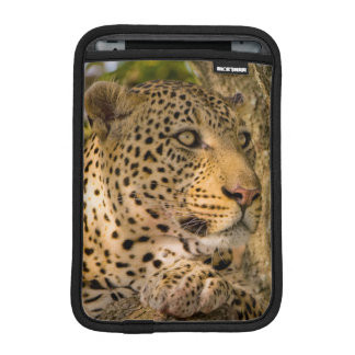 Adult Leopard (Panthera Pardus) Rests iPad Mini Sleeve