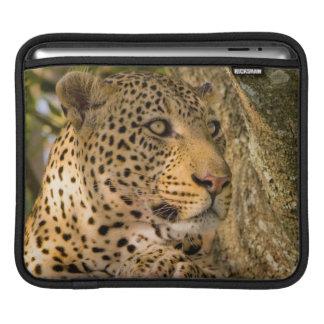 Adult Leopard (Panthera Pardus) Rests iPad Sleeve