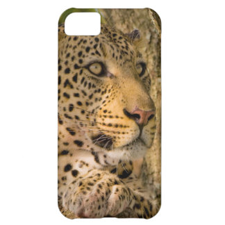 Adult Leopard (Panthera Pardus) Rests iPhone 5C Case