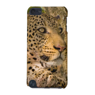 Adult Leopard (Panthera Pardus) Rests iPod Touch (5th Generation) Cover