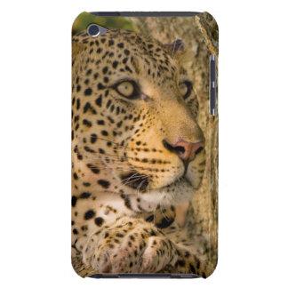 Adult Leopard (Panthera Pardus) Rests iPod Touch Case