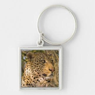 Adult Leopard (Panthera Pardus) Rests Key Ring