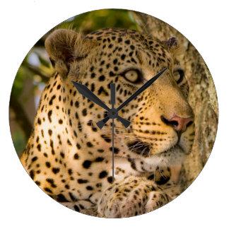 Adult Leopard (Panthera Pardus) Rests Large Clock