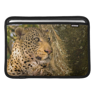 Adult Leopard (Panthera Pardus) Rests MacBook Sleeve
