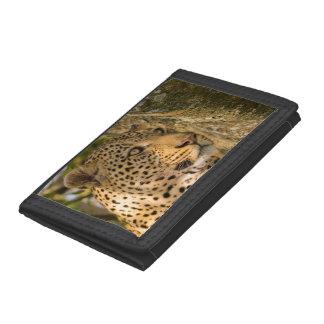 Adult Leopard (Panthera Pardus) Rests Tri-fold Wallets