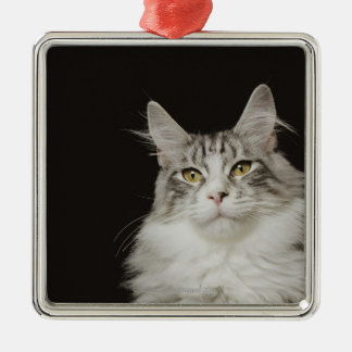 Adult Maine Coon Cat Christmas Ornament