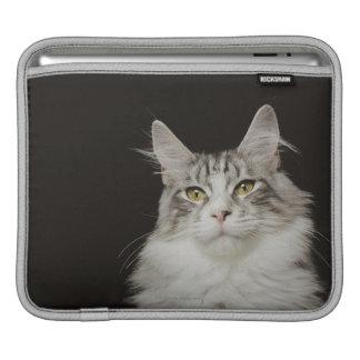 Adult Maine Coon Cat iPad Sleeve