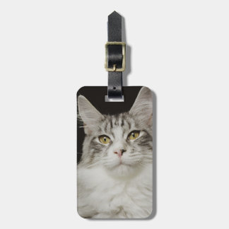 Adult Maine Coon Cat Luggage Tag