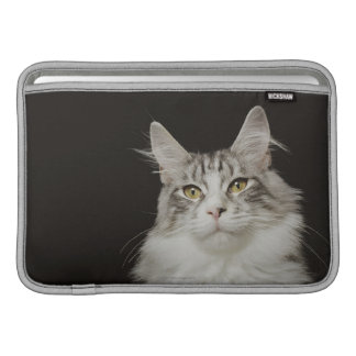 Adult Maine Coon Cat MacBook Sleeve