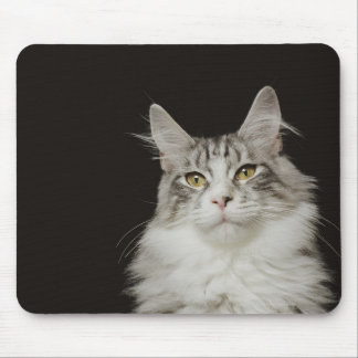 Adult Maine Coon Cat Mouse Mat