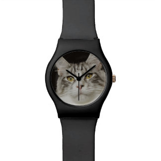 Adult Maine Coon Cat Watch