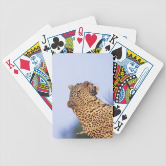 Adult male leopard (Panthera pardus) Bicycle Playing Cards