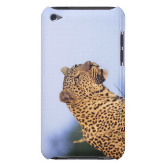 Adult male leopard (Panthera pardus) iPod Case-Mate Case