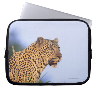 Adult male leopard (Panthera pardus), resting on Laptop Sleeve