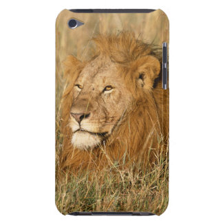 Adult male Lion at first light Barely There iPod Cover
