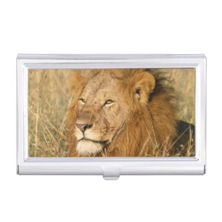 Adult male Lion at first light Business Card Holder