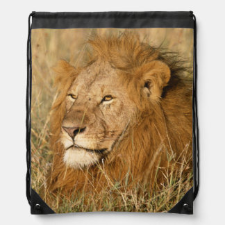 Adult male Lion at first light Drawstring Bag