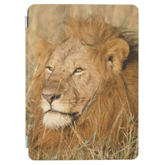 Adult male Lion at first light iPad Air Cover