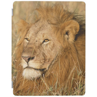 Adult male Lion at first light iPad Cover