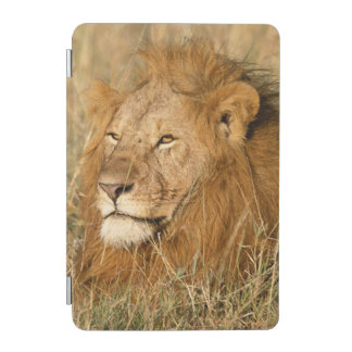 Adult male Lion at first light iPad Mini Cover