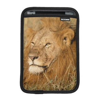 Adult male Lion at first light iPad Mini Sleeve