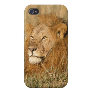 Adult male Lion at first light iPhone 4 Cover